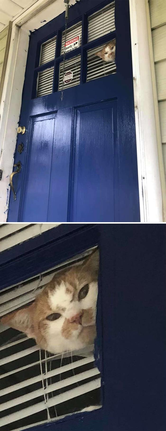 Cat Gets Mad When Mom Won't Let Him Outside