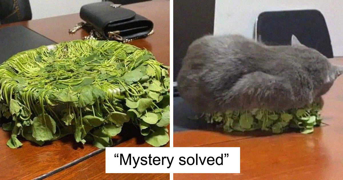 50 Hilarious Cat Posts That You Need To See Right Meow (New Pics)