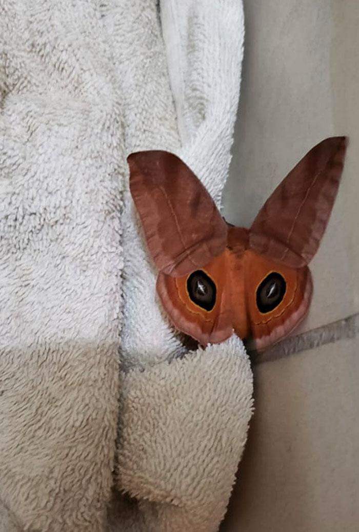 La mariposa parece un zorro