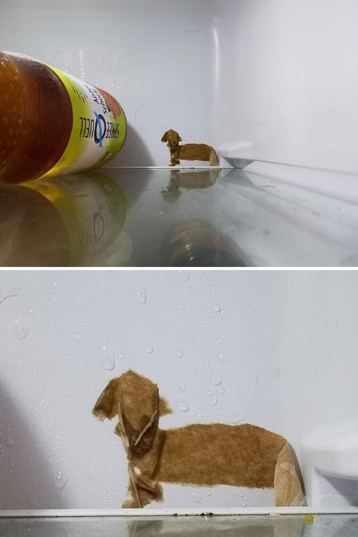 El trozo de papel que está congelado en la parte trasera de mi nevera parece un perro salchicha
