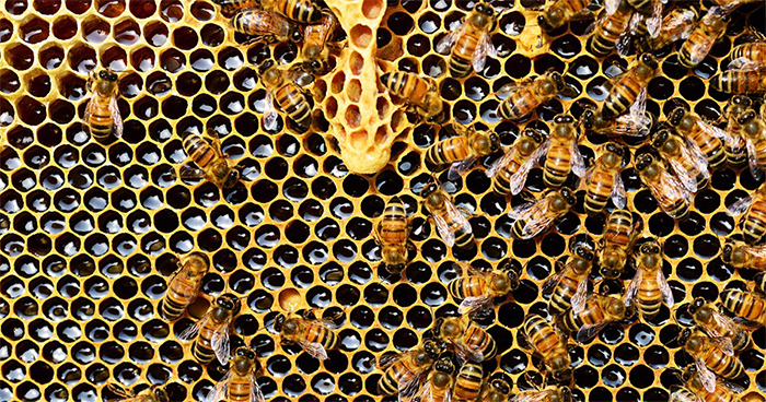 The Number Of Honey Bees In The US Is Growing, Some States Are Experiencing Around 70% Increase Over The Last 2 Years