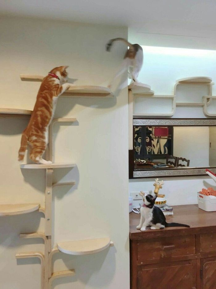 Turn IKEA Frosta Stools Into A Large And Creative Cat Tree Along The Walls