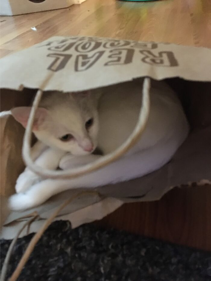 Our Kitten, Pinky Rainbow Loves Hanging Out In Paper Bags Of Any Kind Or Size.