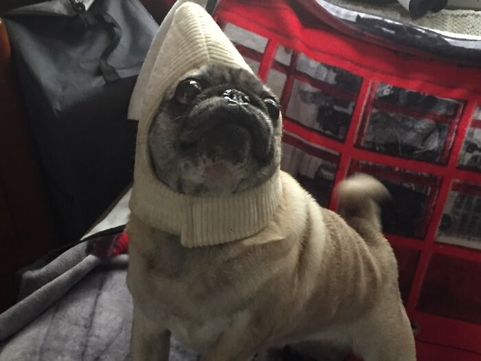 Lucy Will Only Wear The Hat To Her Banana Costume