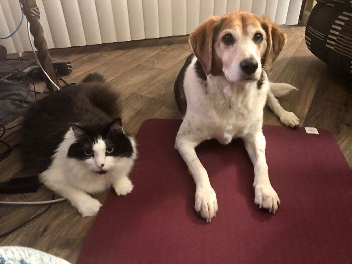 They Like To Watch Me Do Yoga.
