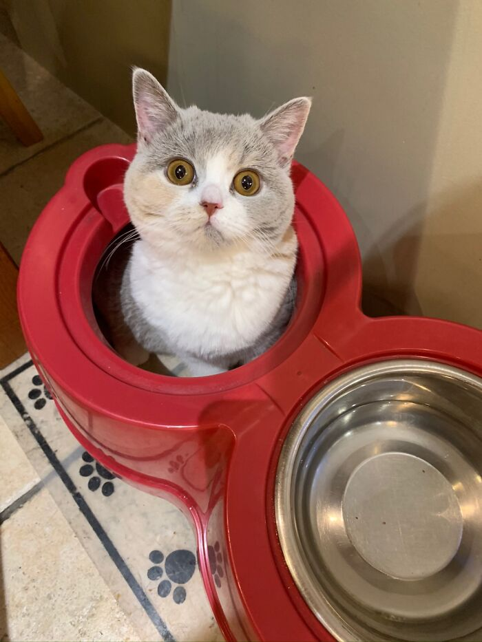 Luna Loves To Hide In The Dog's Food Bowls!