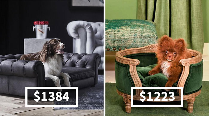 20 Luxury Furniture For Cats And Dogs That Costs More Than You Would Spend On Your Own Bed
