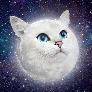 KittenQueen