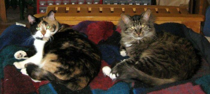 Estos dueños de gatos explican cómo el lenguaje corporal felino es malinterpretado al compararlo con el de los perros