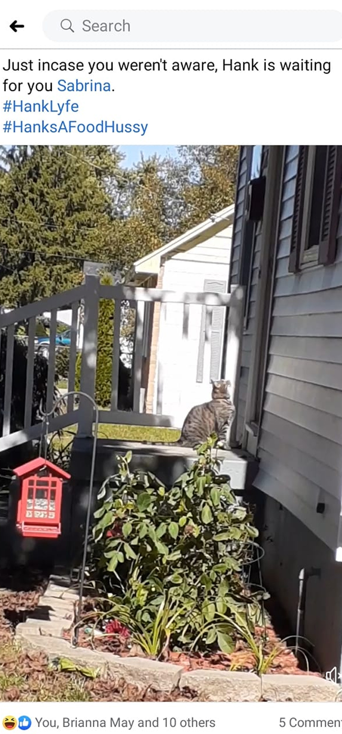 My Neighbor Tagged Me In This Post Yesterday To Let Me Know That Her Cat Was Outside My Front Door Waiting For Me To Bring Her Out A Sheba. Her Cat Will Hound Me Relentlessly For Food Even Though She Has All The Food Her Can Eat Right Next Door. I Love Hank So Much. (Yes, Hank Is A Girl!!)