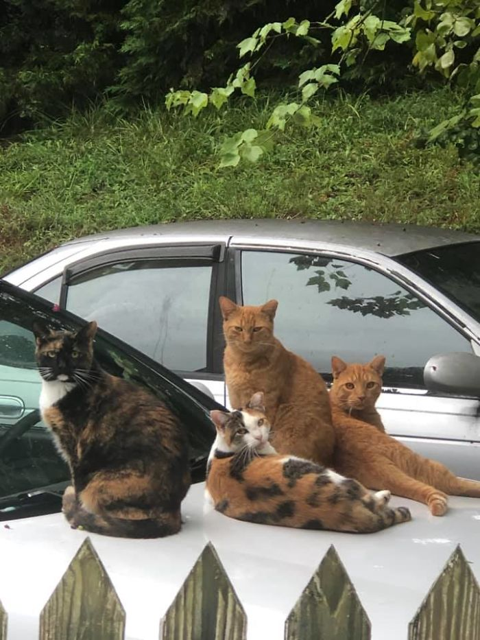 So Sorry For Breaking The Rules (And This Will Be My Only Update I Promise)—i Posted A Few Weeks Ago About The Feral Family Of Six That Are Taking Over My House (But Not My Cats). Today I Caught The Ferals Knotted Up On My Car Sleeping. Two Jumped Down Immediately, But The Rest Took Enough Time Out Of Their Busy Day To Give Me The Stink Eye. When They Feel Brave Enough To Do That, I Think That's When They Officially Become Your Cats