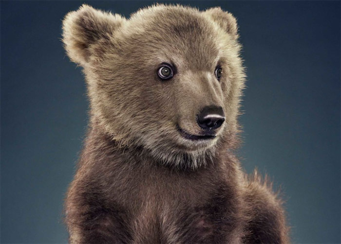 Jill Greenberg Photographed Bears In A Setting You've Probably Never Seen Before (30 Pics)