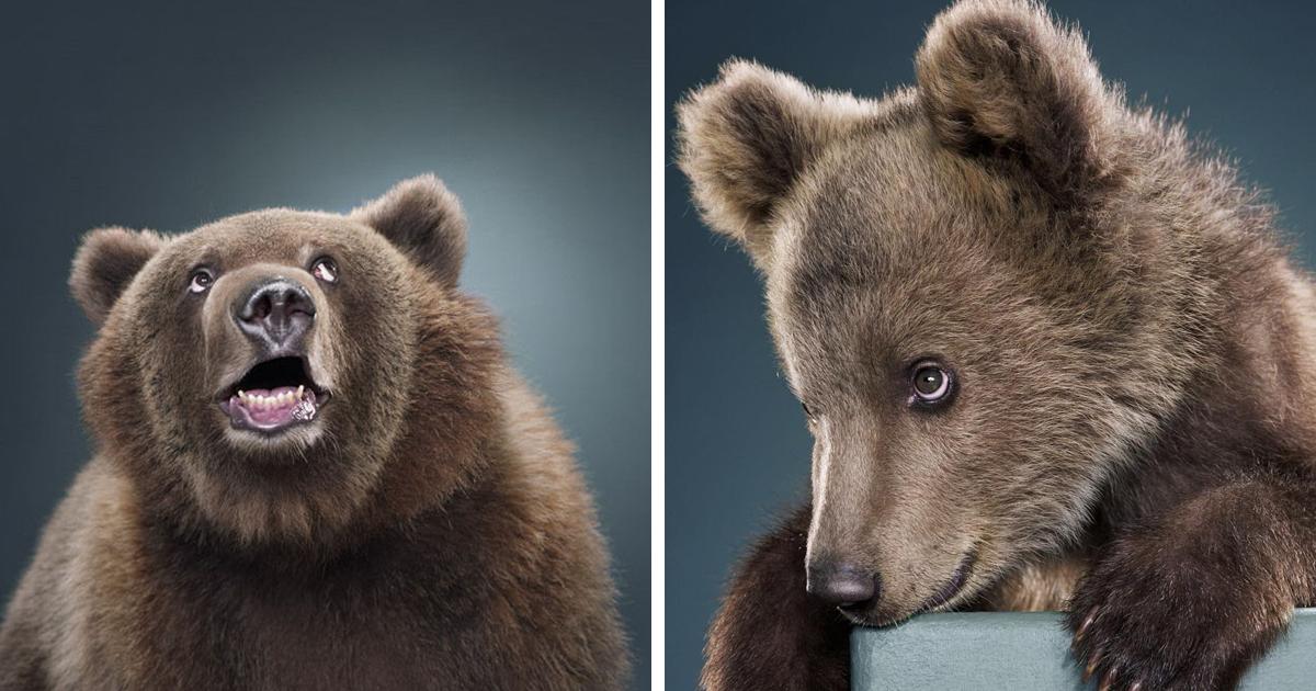 Jill Greenberg's Bear Portraits (65 Pics)