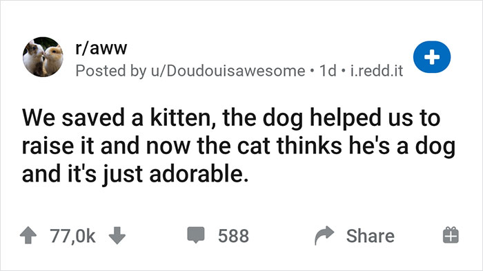 """""""We Saved A Kitten, The Dog Helped Us To Raise Him, And Now The Cat Thinks He's A Dog, And It's Just Adorable"""""""