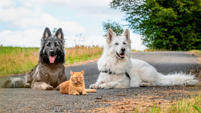 """""""Salvamos a un gatito, el perro nos ayudó a criarlo y ahora el gato cree que es un perro, es adorable"""""""