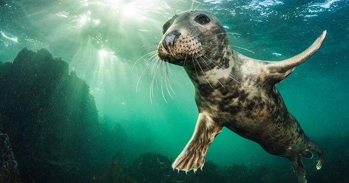 15 Of The Best Animal Images Of The Decade From The British Wildlife Photography Awards