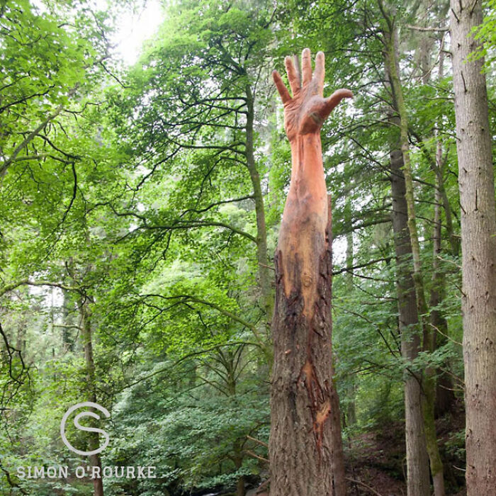Storm-Damaged Tree In Wales Gets Transformed Into A 50 Ft Hand Worth ,000