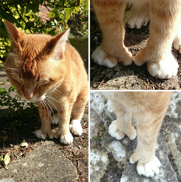 A Cat With An Opposable Thumb. I For One Welcome Our New Cat Overlords