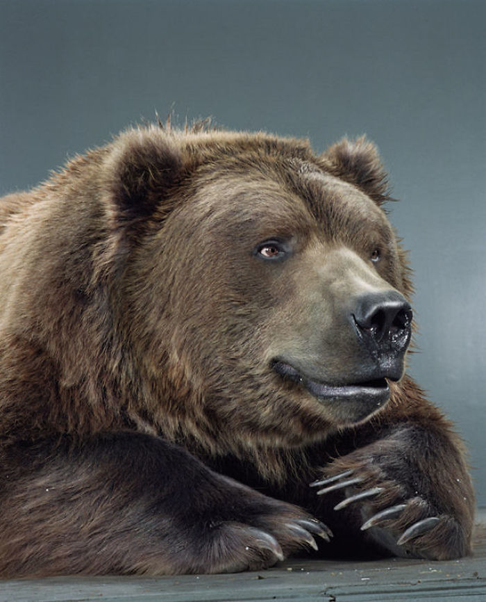 Bears Like You've Never Seen Under A Photographer's Lens (55 Pics)