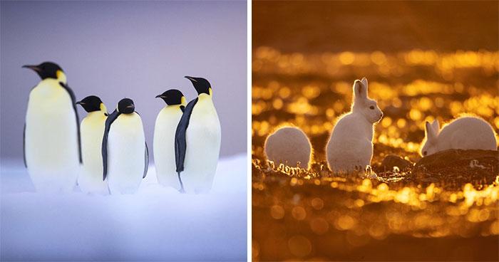 30 Wildlife Photos With A Near-Death Story Behind Them As Told By Photographer Couple Uri And Helle Løvevild Golman