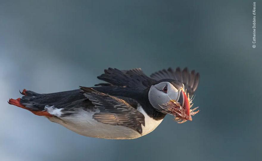 """Davranış: Yüksek Övgüye Değer Kuşlar: Catherine Dobbins D'alessio'dan """"Geç Teslim"""""""