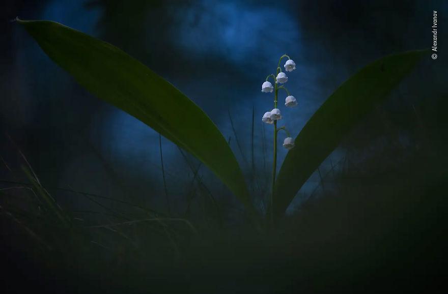 """Bitkiler ve Mantarlar Çok Övgüye Değer: """"Alacakaranlık Çanları"""", Alexandr Ivanov"""