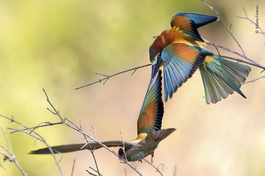 "Rising Star Portfolio Award Winner: ""Perch Power"" By Alberto Fantoni"