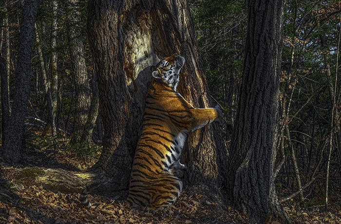 The Wildlife Photographer Of The Year 2020 Winners Have Just Been Announced (15 Pics)