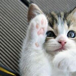 Kitty Twinkle
