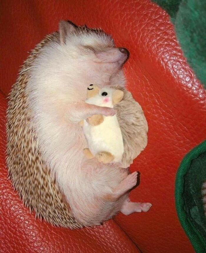 Hedgehog With Plushie