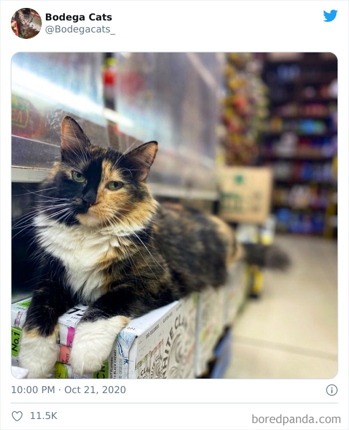 This Twitter Account Collects Photos Of Cats In Small Shops Looking Like They Own The Place (50 New Pics)