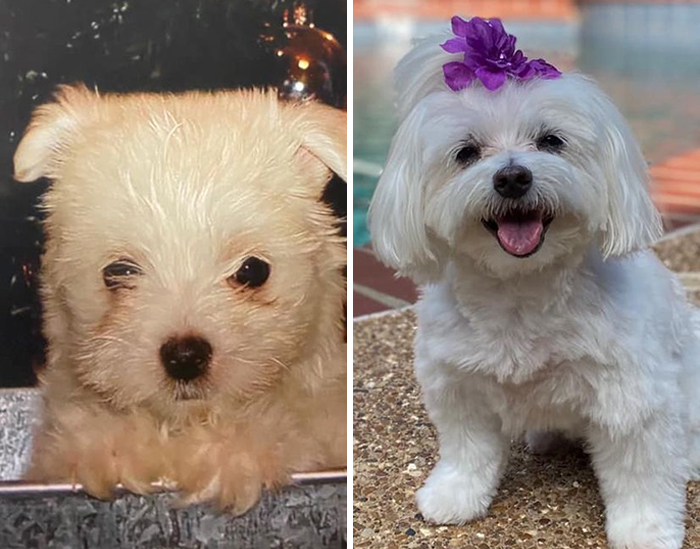 Before-After-Pet-Challenge
