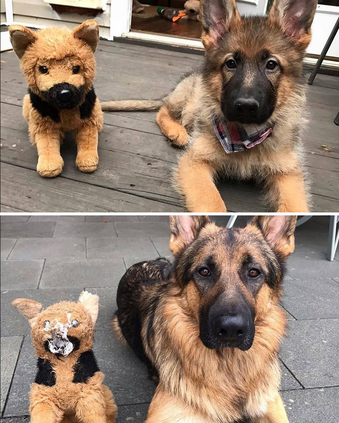 A Good Boy Growing Up With His Favorite Toy