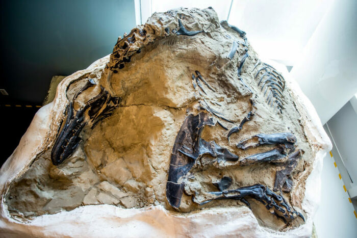 The World's First Complete T-Rex Skeleton That's 67 Million Years Old