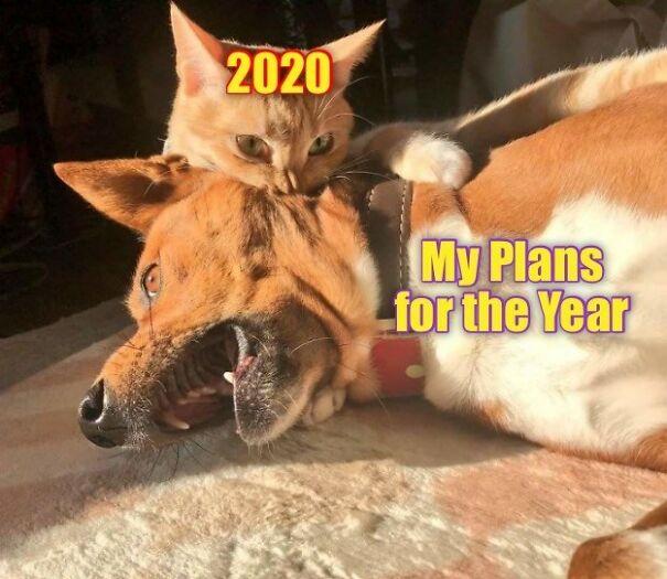 2020-bites-5fbdba72e6da2.jpg