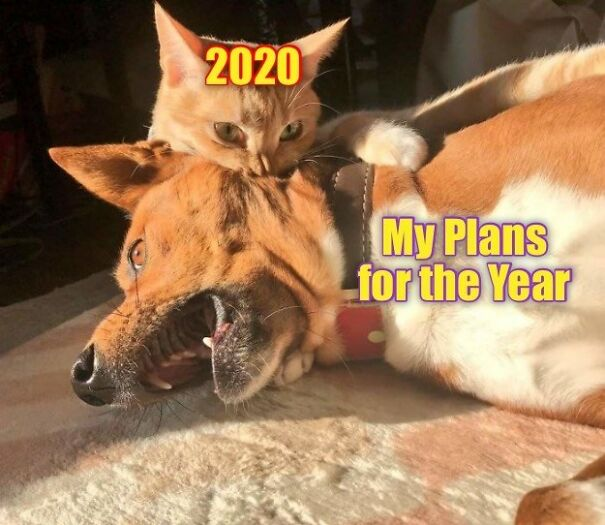 2020-bites-5fbf05dc0a252.jpg