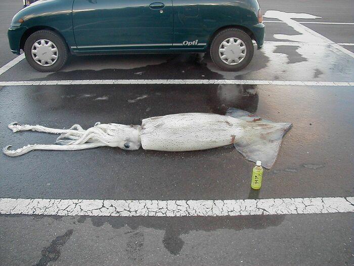 Calamar aparcado