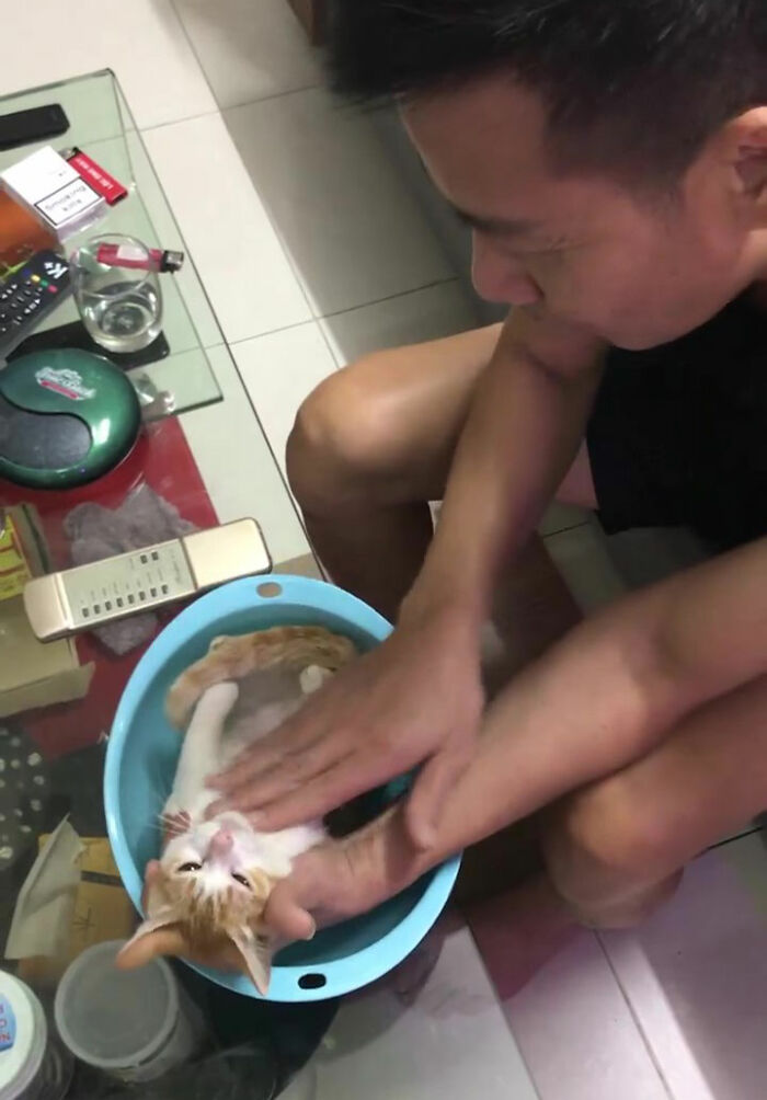 Grandpa Teaches Son How To Bathe A Child By Utilizing A Cat As An Instance