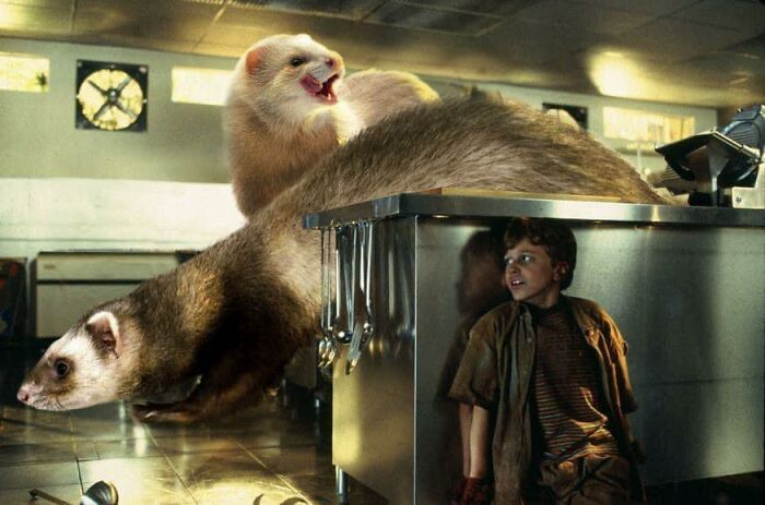 A picture where Dinosaurs where replaced with Ferrets