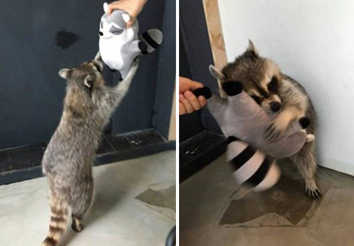 Trash Panda Loves His Plushy Trash Panda Toy