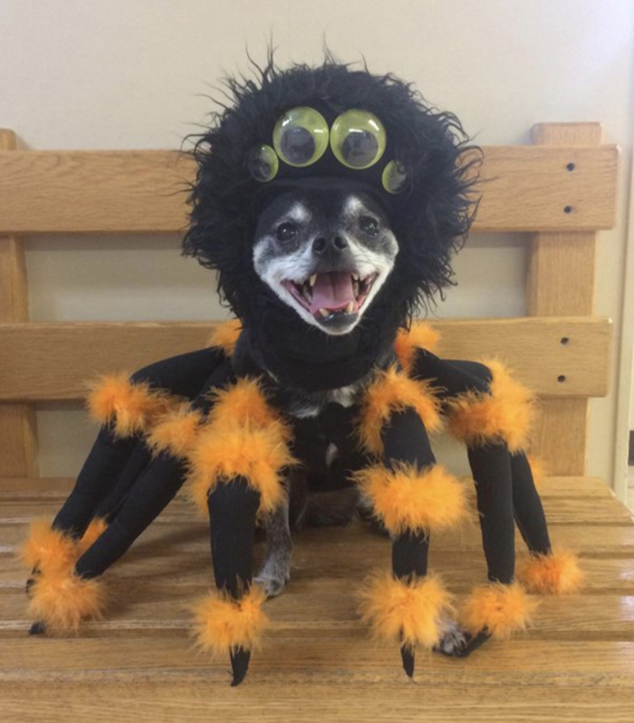 A Spooktacular Spider Costume