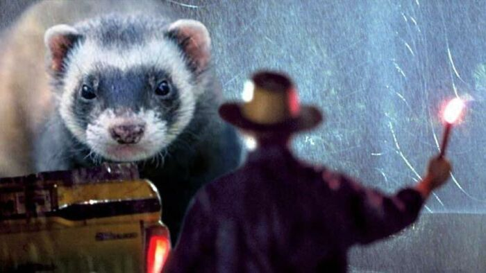 Somebody Changed Jurassic Park Dinosaurs With Ferrets, And This Model Is Most likely Higher Than The Authentic