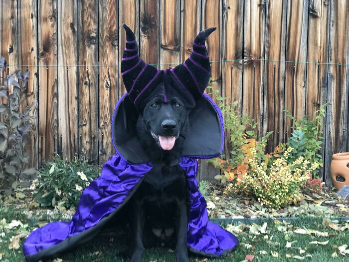 Maleficent The Dragon Witch
