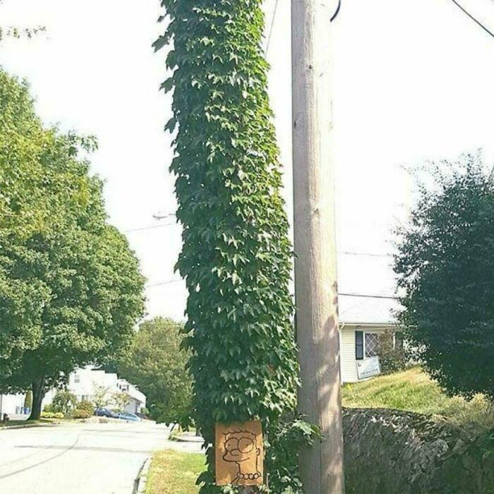 Marge Tree