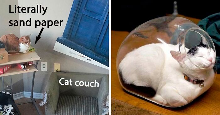 50 Funny Examples Of Cat Beds And Cat Logic