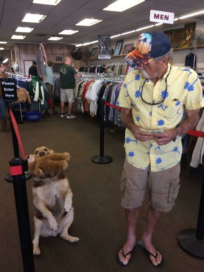 He Came In To The Thrift Store With His Toy And Then His Owner Asked Him Do A Trick For My Photo! Made My Day