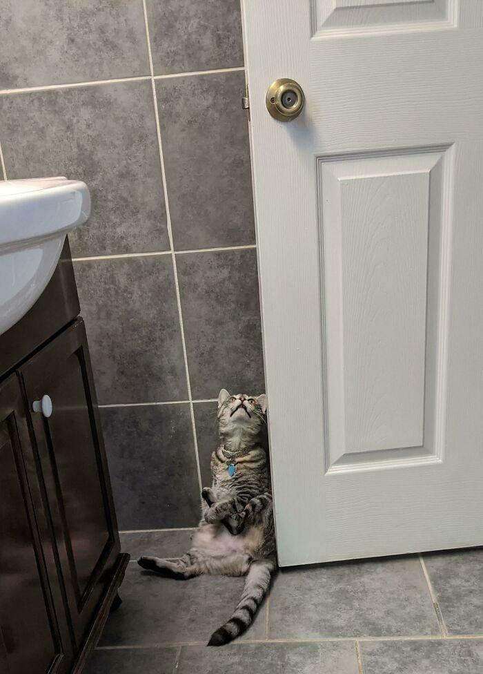 ¿Por qué siempre hace esto cuando voy al baño?