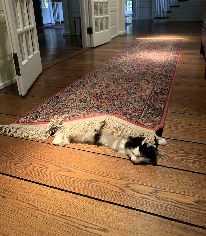Adora las alfombras