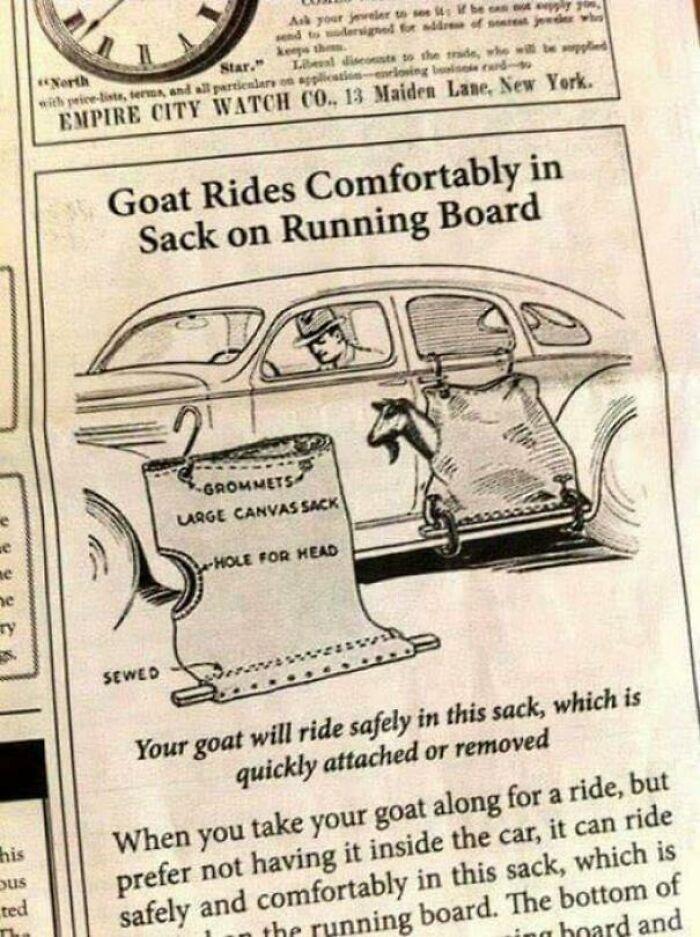 Cómo llevar a tu cabra en coche
