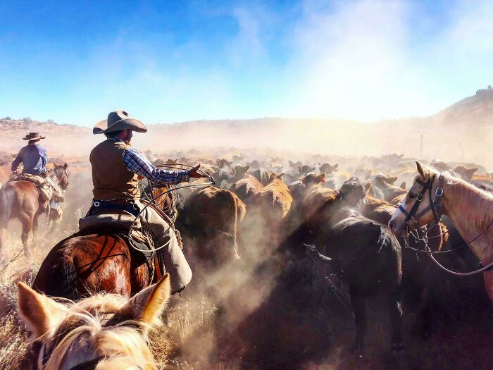 Snapped This Moment During My 12 Day - 110 Mile (800 Head Of Cattle) Drive From Utah To Arizona